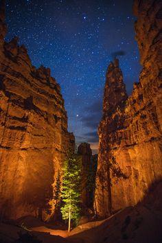 Descent, Bryce Canyon, Utah, USA, by Wayne Pinkston, on flickr. #brycecanyon