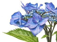 Visit an Anna Mason exhibition to take in the vibrant beauty of her watercolours in person. | Anna Mason Art