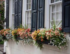 Balkonkästen bepflanzen südbalkon sonnig sommer