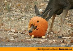 Ciervo preparado para Halloween.