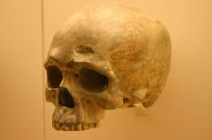 1024px-Liujiang_cave_skull-a._Homo_Sapiens_68,000_Years_Old.jpg (1024×680) - Hall of Human Origins, the Smithsonian National Museum of Natural History, USA. Auteur : Ryan Somma, 1980.