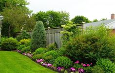 mix of shrubs and perennials in a border...