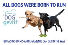 Not All Dog Joint Supplements Are Created Equal - http://petcarecheap.com/not-all-dog-joint-supplements-are-created-equal-2/
