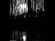 Incredible photograph of what is believed to be shadow people standing on a hill in a forest beside water. Ghost Orbs, Deep Dark Fears, Paranormal Stories, Shadow People, Dark Images, Like A Cat, Ghost Stories, Urban Photography, Black And White