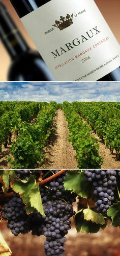 Chateau Margaux vineyards and grapes