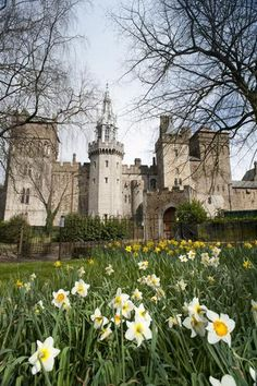 Cardiff Castle and the Barbican Tower, Wales, UK. I love daffodils. Oh The Places You'll Go, Places To Travel, Places To Visit, Palaces, South Wales, Wales Uk, Welsh Castles, Cardiff Wales, Famous Castles