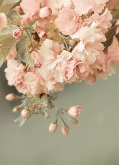 wonderful pink