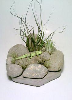 Air Plant Terrarium, Stone Air Plant Holder, Rock Tillandsia Holder, Rock Garden, Desert, Lizard. $25.00, via Etsy.