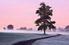 Tree at Dawn - County Kildare Ireland ][OC ][OS] landscape Nature Photos Photography Composition Rules, Photography Lessons, Artistic Photography, Photography Rules, Digital Photography, Composition Techniques, Composition Art, Ireland In Winter, Tree Artwork