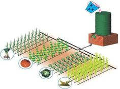 PVC gravity feed drip irrigation taake a 7 dy FREE testdrive with our e-learning course software today Vegetable Garden Design, Veg Garden, Water Garden, Raised Garden Beds, Raised Beds, Gnu Linux, Drip Irrigation System, Rain Barrel, Veggie Gardens