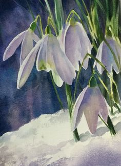 """Snowdrops"" watercolour by Trevor Waugh"