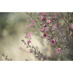 """Mi piace"": 120, commenti: 1 - yuko* (@kanziru_shizen) su Instagram: "". . 包まれていると安心する 大好きなグリーンの . 靴と鞄を揃えた今日。 . . 環境が変化する苦手な春も . 勇気を持って少しずつ 気持ちを外へ向けたいから… . . うんうん、きっと…"""