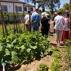 Sydney Region Community Garden Quarterly MeetUP — Sat 9 Aug 2014