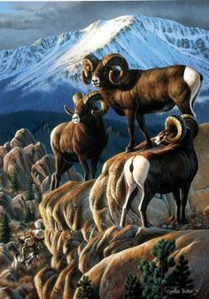 """""""The Guardians"""" by Cynthie Fisher ~ North American Big Game bighorn sheep Western Comics, Western Art, Desert Animals, Nature Animals, Moose Pictures, Animal Pictures, Wildlife Paintings, Wildlife Art, Wild Animals Photos"""