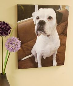 Fantastic pet canvases from: crownprinters