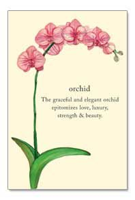 Orchid--the graceful and elegant orchid epitomizes love, luxury, strenght & beauty