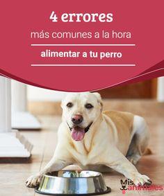 4 errores más comunes a la hora de alimentar a tu perro  Por falta de conocimiento o no animarnos a preguntarle al veterinario puede que estés cometiendo errores al alimentar a tu perro. #errores #alimentación #conocimiento