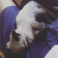 #sleep #cat #babycat