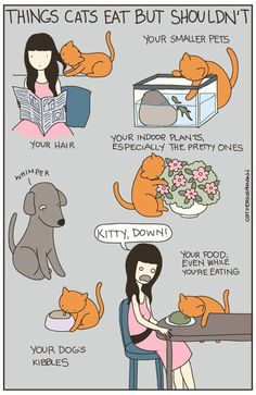 cat versus human http://sulia.com/my_thoughts/0ae87a02-8926-47e7-8f00-269891062f5b/?pinner=119686333