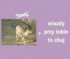 Po co brać leki jak można brać mEmE # Humor # amreading # books # wattpad Wtf Funny, Funny Cute, Funny Memes, Life Humor, Man Humor, Fat Memes, Polish Memes, Sweet Memes, Heart Meme
