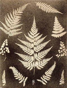 Victorian Spatterwork