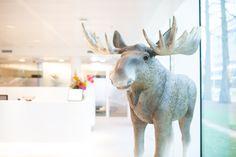 The one and only Frenk! Onze levensechte Elanden zijn een unieke toevoeging aan uw ruimte.   Bestel Frenk of onze andere kerstdecoraties nu eenvoudig en snel via onze webshop! Zie link in bio/ webshop.ambius.com   #kerst #ambius #sfeerbeleving #mooistetijdvanhetjaar #frenk #decoraties #kerstopkantoor