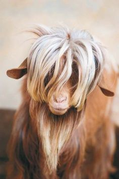 Photoman29/Shutterstock/ Extraordinary Goats Blogged: 4 #goat #photos. Which one is your favorite? #goats Source - Extraordinary Goats: Meetings with Remarkable Goats, Caprine Wonders & Horned Troublemakers