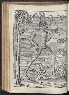 Flavius Vegetius Renatus: Vier Bücher der Rytterschafft (Four books on knighthood), Erfurt, Germany, 1511.