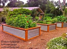 Raised Bed with Galvanized Tin.