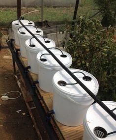 How to build a Dutch Bucket plant grow area for your Aquaponics System - MyAquaponics #hydroponicsdiy