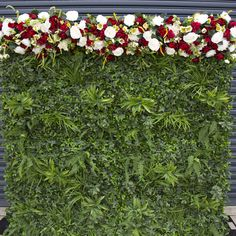 Create the perfect backdrop to your event with help from Sharebooth. We offer stunning flower walls at affordable prices. Contact us today. Wall Backdrops, Photo Booth Backdrop, Photo Booths, Flower Backdrop, Flower Wall, Greenery, Birthdays, Photo Wall, Herbs