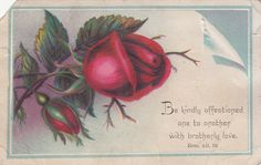 Be Kindly Affectioned ROM XII 16 Red Rose Victorian Religious Card C 1880s |