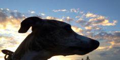 Kerouac silhouette