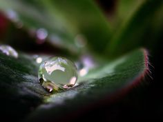 Image detail for -Best picture gallery - macro photography, water droplet, by ToniVC: Photography Sites, Water Photography, Macro Photography, Creative Photography, Amazing Photography, Dream Photography, Cool Pictures, Cool Photos, Photo Class