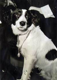 Pickles (died was a black and white Collie dog renowned for his role in finding the stolen Jules Rimet Trophy in Wikipedia Jules Rimet Trophy, World Cup Trophy, 1966 World Cup, Free Dog Food, Blue Peter, International Books, City Farm, Richmond Park, Rare Stamps