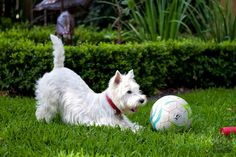 PlaYfuL WesTie and S0ccer Ball