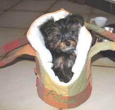 Schnittmuster Hundetragetasche