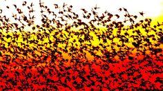 Schwarze Sonne - Naturschauspiel im Nationalpark Wattenmeer an Südjütlands Nordseeküste