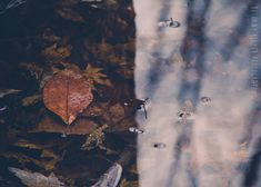 """Abstract Autumn Photography 5x7 Print """"Perception"""" by riotjane, $12.00, on Etsy."""