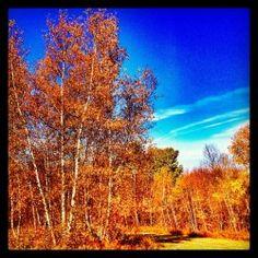 Spectaculaire! Encore! #automne #couleurs #colors #sky #quebec #pornsky #instagram #ciel #fall Ciel, Clouds, Outdoor, Instagram, Colors, Fall, Projects, Outdoors, Outdoor Games