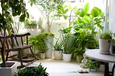 I'd love this sort of adorable mini jungle for my balcony