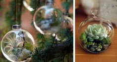 Who said you had to decorate with pine, holly and mistletoe? {photos via 100 Layer Cake , Flora Grubb Gardens , Project Wedding } Christmas And New Year, Holiday Fun, Christmas Crafts, Christmas Decorations, Xmas, Christmas Ornaments, Christmas Stuff, Holiday Ideas, Christmas Ideas