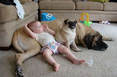Love this picture.  This is a perfect picture of a pug...they always need their human and a friend.