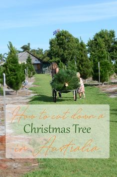 See what happened when we visited 'Christmas Trees of Wanneroo' in Western Australia to cut down our Christmas Tree. It was hot work! Christmas In Australia, Christmas Tree Farm, Western Australia, In The Heights, Something To Do, Journey, The Journey