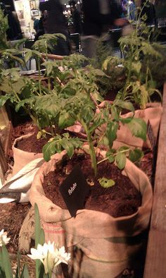 Grow Potatoes in a bag - Seattle Flower & Garden Show