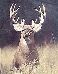 get a monster buck!