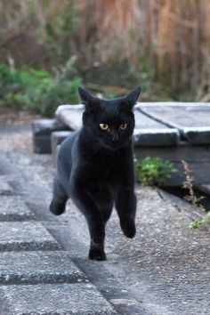 If a black cat crosses your path, it's a sign the animal is going somewhere. --Groucho Marx
