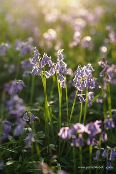 Wonderful Places To See Bluebells in Surrey, Hampshire and Sussex - Pumpkin Beth Beautiful Places To Visit, Wonderful Places, Places To See, English Bluebells, Surrey, Hampshire, Beautiful Gardens, Blue Flowers, Bloom