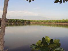 Hutan Mangrove, Probolinggo, East Java, Indonesia