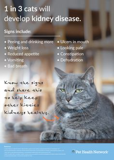 Did you know? 1 in 3 #cats will develop #kidneydisease. #pethealthnetwork #sdma